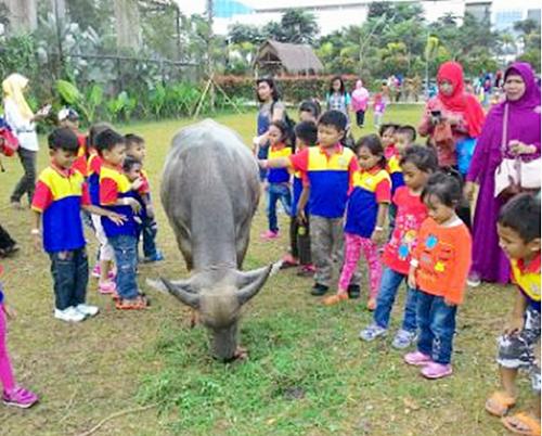 Anak-anak biMBA Merpati Raya Memberi Makan Kerbau