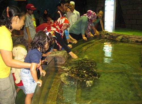 Wisata Edukasi Biota Laut di Sea world