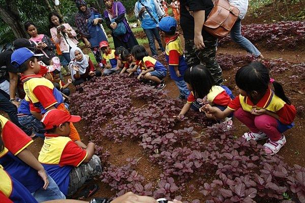Mengenal Jenis Tanaman di Farming Educations